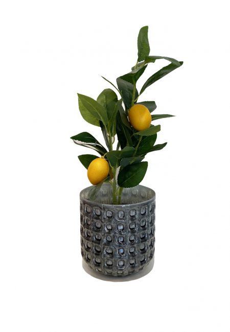Citroenplantje, kunstboom