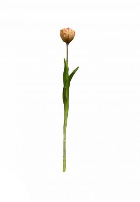 Peach tulp